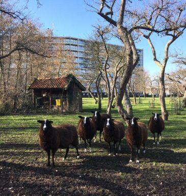 Foto 46. kinderboerderij
